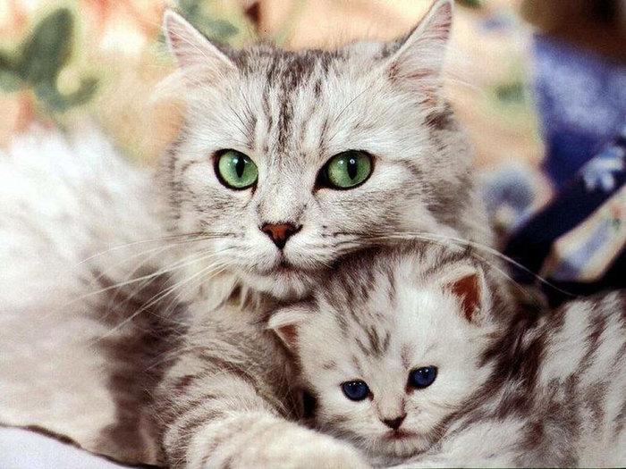 5698144_cat2 (700x525, 102Kb)