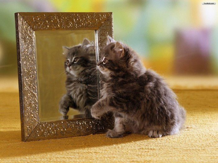 5698144_the_cat_and_the_mirror_wallpaper_47fa0 (700x525, 292Kb)