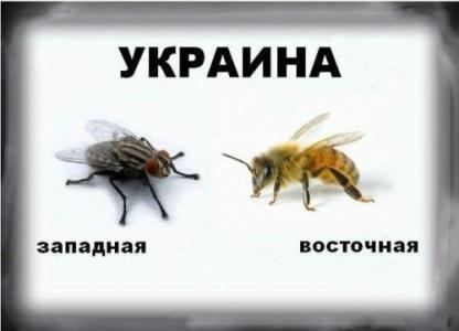 укра1 (416x300, 98Kb)