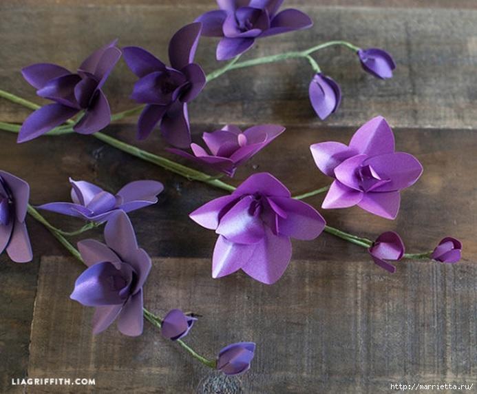 Цветы ОРХИДЕИ из цветной бумаги. Шаблоны (2) (693x572, 218Kb)