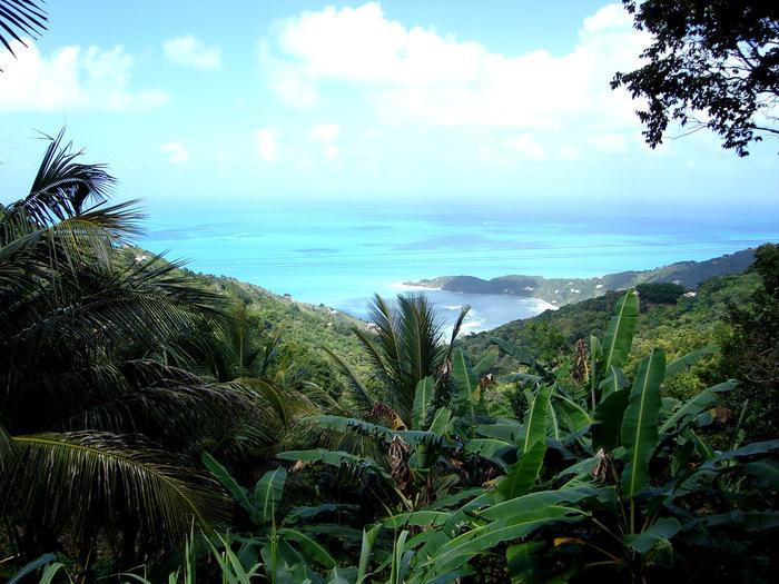 Tortola_02 (700x525, 178Kb)