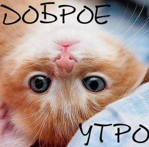 http://img1.liveinternet.ru/images/attach/c/11/115/848/115848471_dUQuci4nhxM.jpg