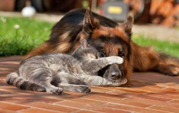 5698144_catanddog01 (600x378, 43Kb)