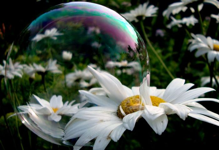 bubble_blower2 (700x482, 49Kb)