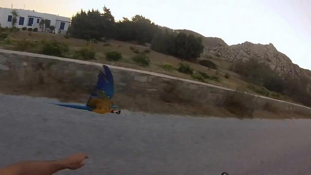 3821971_Racing_my_Macaw_Parrot_at_KolimbithresParos_mp4_snapshot_00_18_2014_08_22_14_23_24 (640x360, 18Kb)