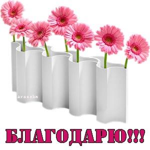 ГЕРБЕРЫ розовые-БЛАГОДАРЮ+++ (300x300, 25Kb)