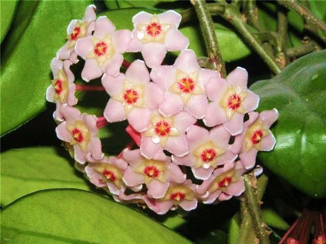 цветы (640x479, 276Kb)