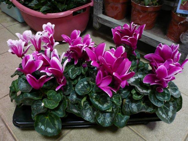 цветы (650x488, 305Kb)