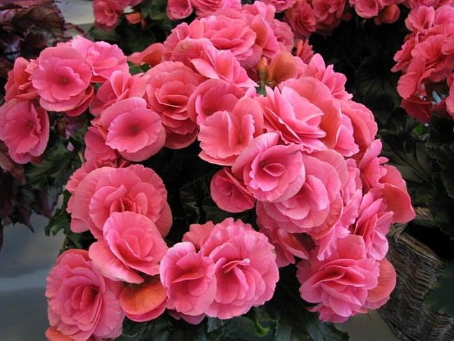 цветы (650x488, 331Kb)