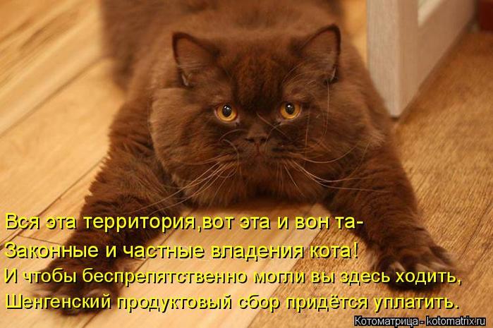 kotomatritsa_0t (700x465, 374Kb)