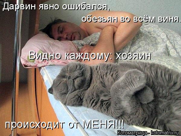 kotomatritsa_52 (600x450, 255Kb)