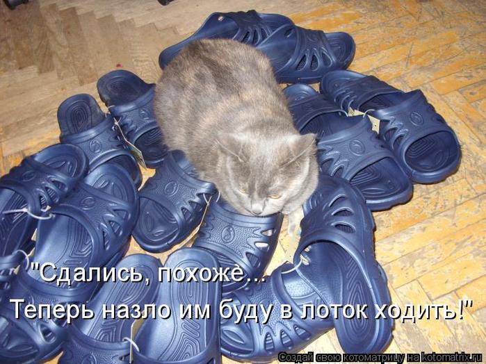 kotomatritsa_G_ (700x524, 435Kb)