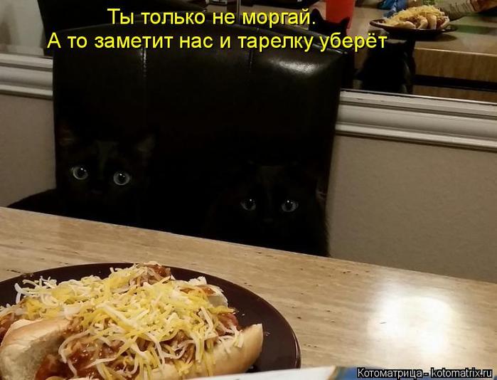 kotomatritsa_it (700x534, 288Kb)