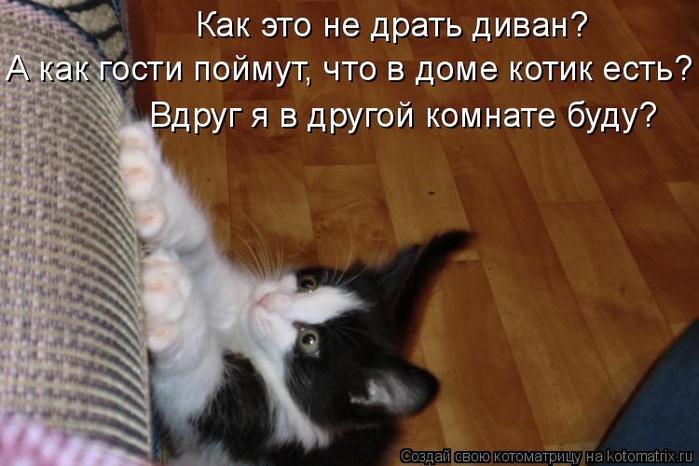 kotomatritsa_qK (700x466, 301Kb)