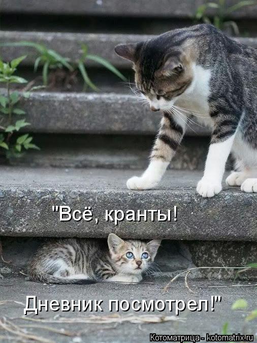 kotomatritsa_V (506x675, 263Kb)