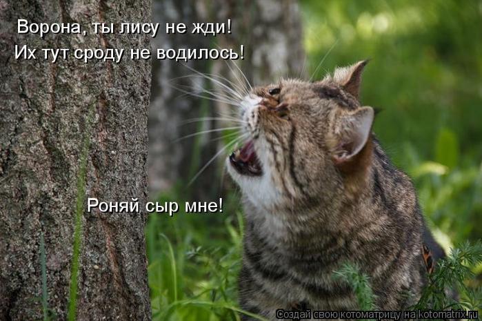 kotomatritsa_z0 (700x465, 332Kb)