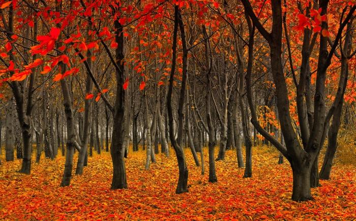 лес (700x435, 535Kb)