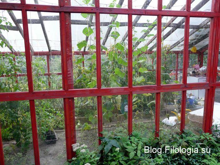Небольшая теплица на садовом участке