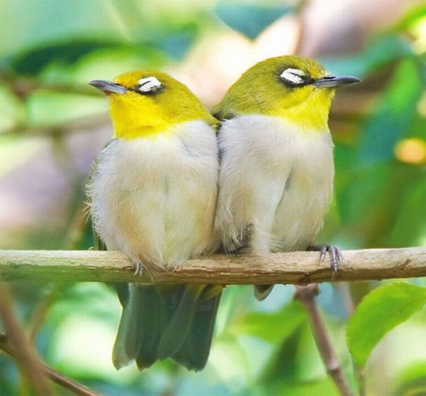 1277896412_1277731639_beautiful_bird_photos_30 (620x576, 251Kb)