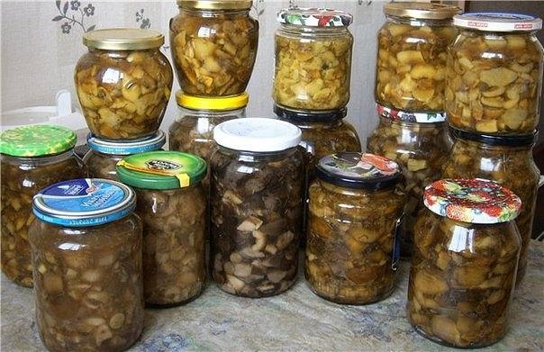 грибов на зиму (604x391, 72Kb)
