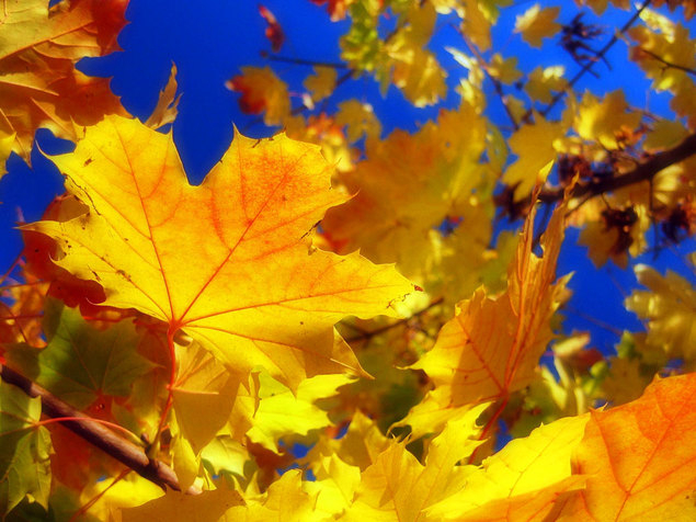 картинка осень сентябрь