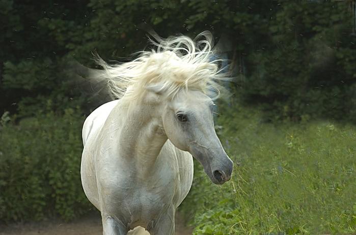 Грация и сила! Интересные факты о лошадях