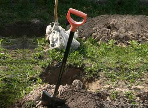 Пересаживаем деревья на приусадебном участке. Полезные советы.