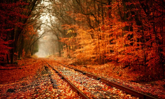 Red-autumn-Railway-Foliage-480x800 (700x420, 112Kb)
