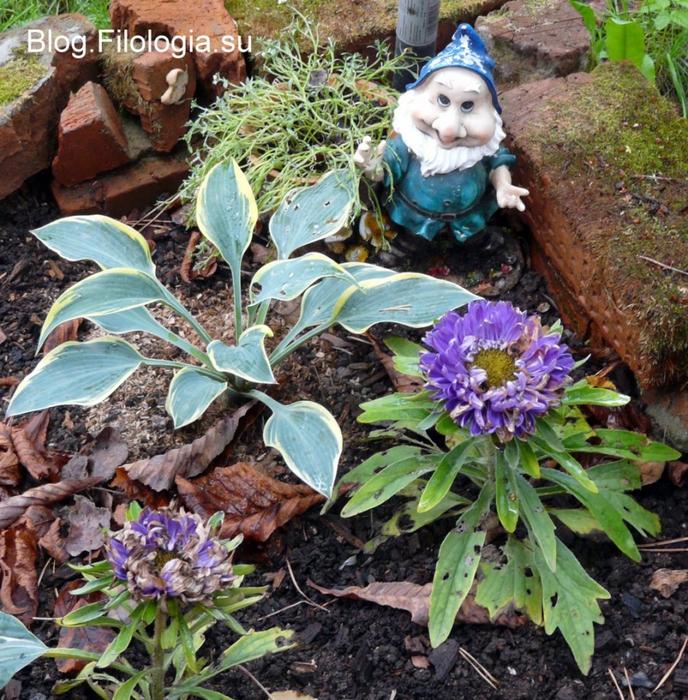 Маленький гномик на садовом участке