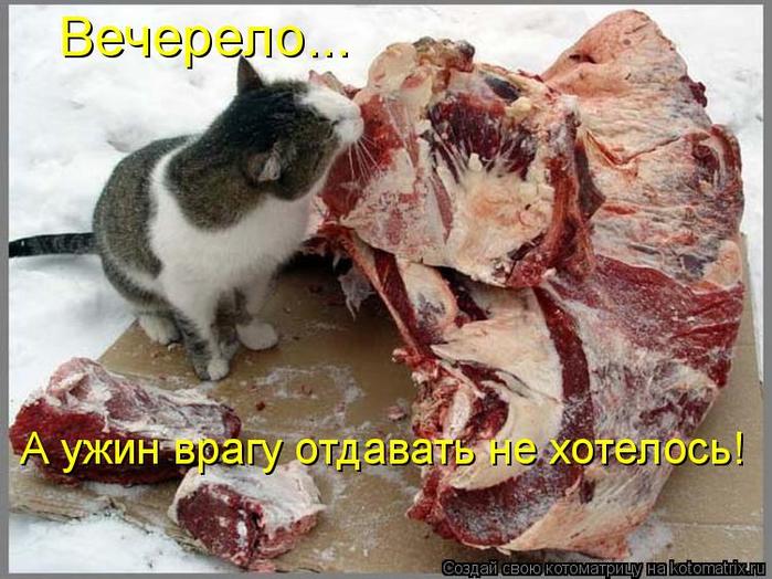 kotomatritsa_1f (700x524, 396Kb)