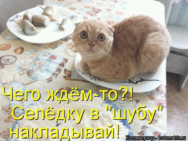 kotomatritsa_5q (640x480, 301Kb)