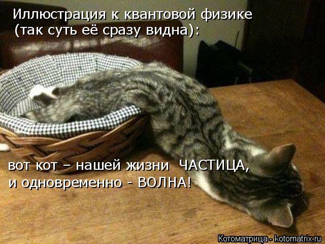 kotomatritsa_a1 (640x480, 285Kb)