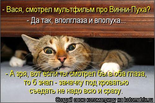 kotomatritsa_C8 (500x333, 205Kb)