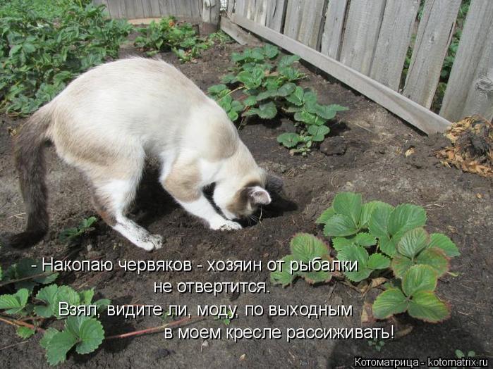 kotomatritsa_cg (700x524, 405Kb)