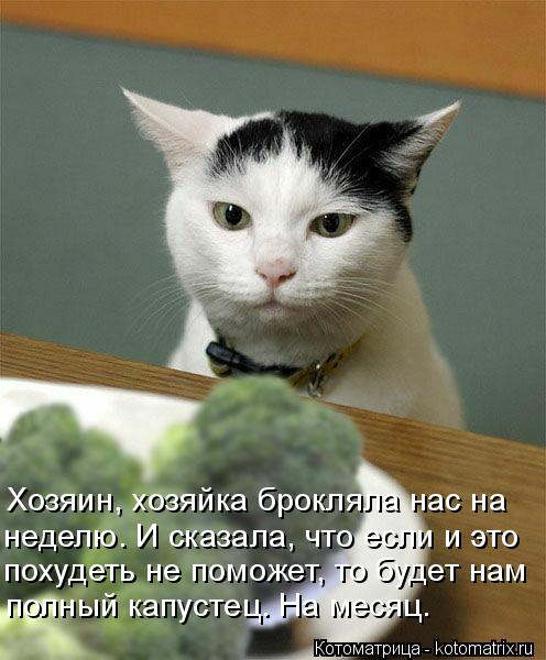 kotomatritsa_Mv (496x600, 211Kb)