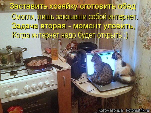 kotomatritsa_rL (604x453, 324Kb)