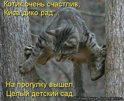 kotomatritsa_UM (531x432, 243Kb)