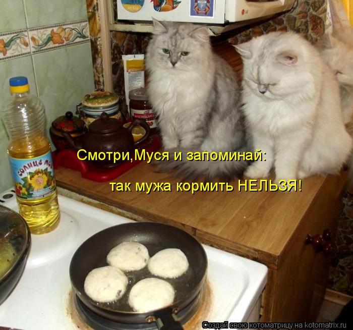 kotomatritsa_TH (700x654, 428Kb)