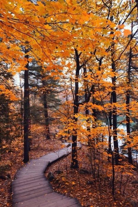 Осень дорожка к реке (466x699, 402Kb)