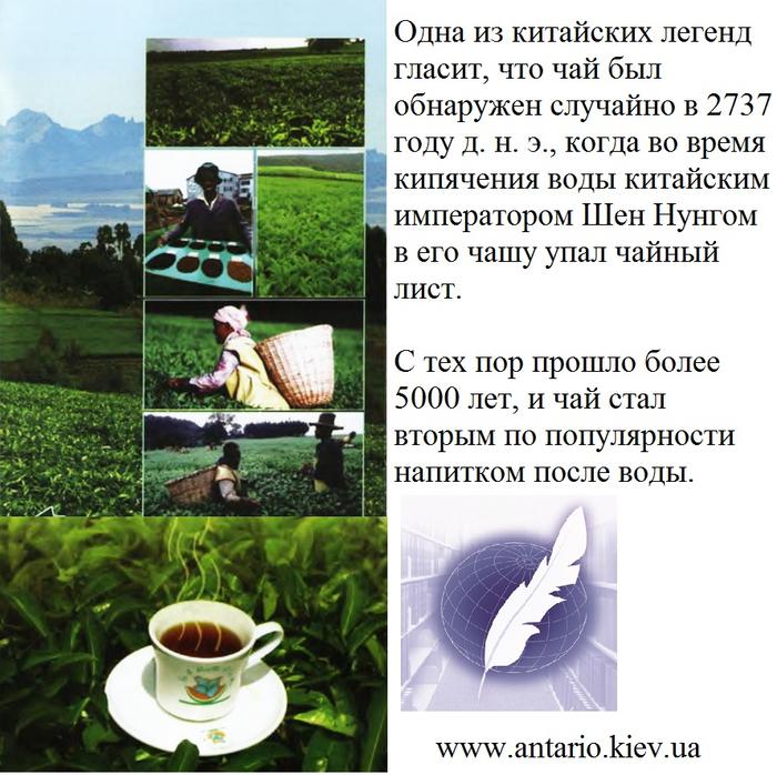 кенийский чай_бюро переводов (700x698, 505Kb)