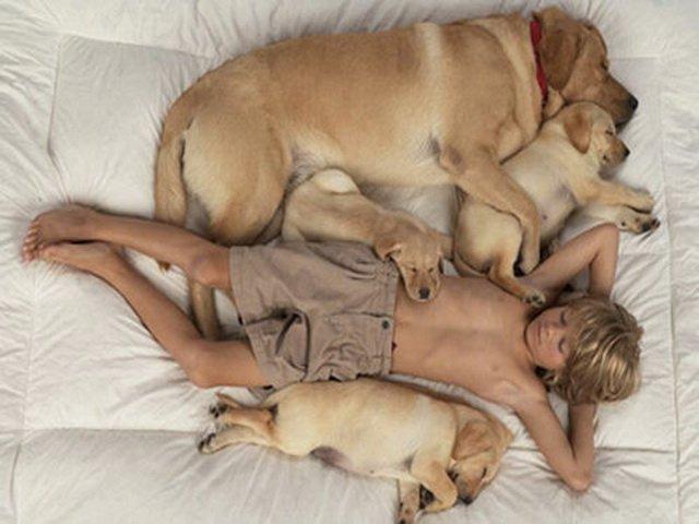 Собаки породы фотографии описания цены - Анализы на дому