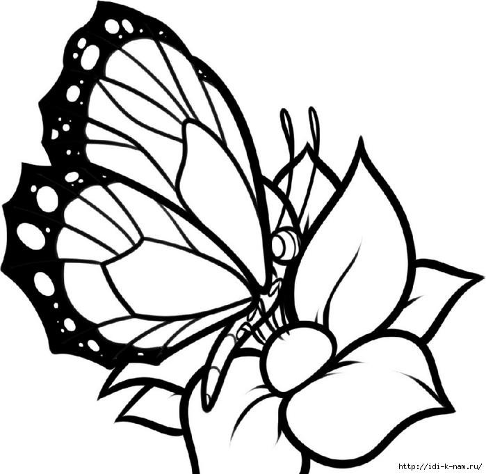 трафареты бабочек, смотреть трафареты бабочек, шаблоны бабочек, смотреть шаблоны для рисования бабочек, детские раскраски бабочки, раскраски для детей бабочки, рисунки для детей бабочки, Хьюго Пьюго рукоделие,