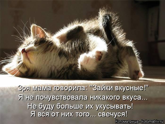 3821971_kotomatritsa_6I (700x525, 59Kb)