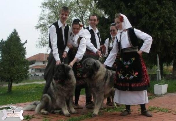 sharplaninskaja-ovcharka-rodom-is-jugoslavii (609x420, 230Kb)
