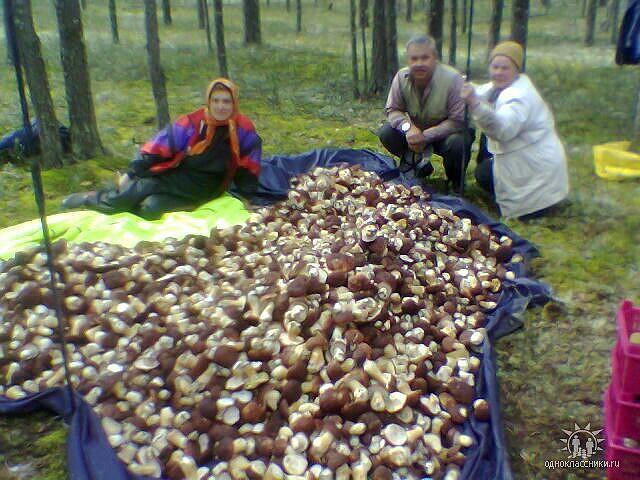грибы (640x480, 83Kb)
