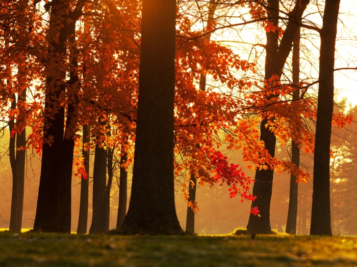 3303834_autumn_1 (700x525, 319Kb)