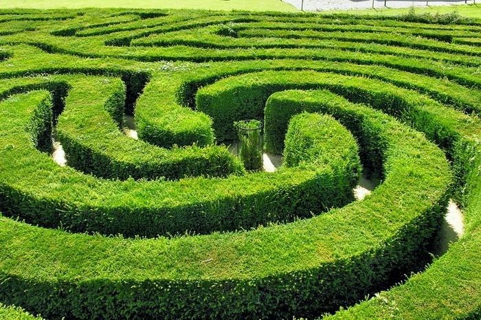 longleat-hedge-maze-4 (700x466, 242Kb)