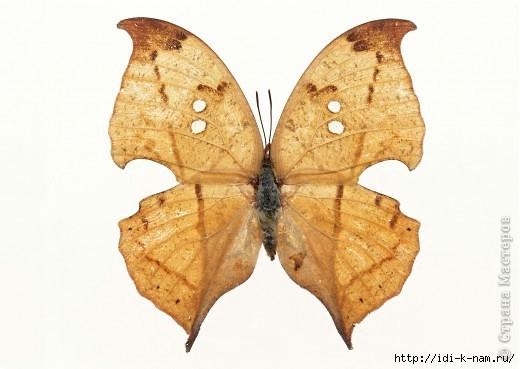 Подборка бабочек для рукоделия