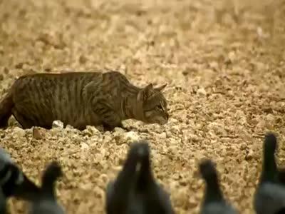 cat_at_hunting2 (400x300, 18Kb)