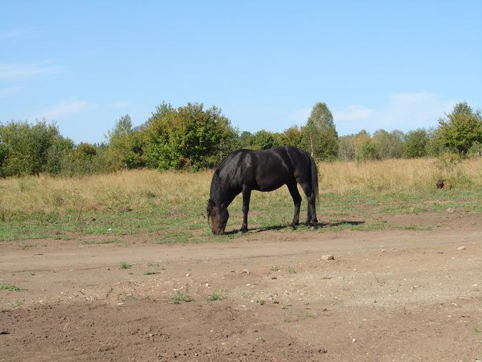 Конь/1415502_11 (700x525, 142Kb)